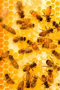 "Company ""Hive"" Culture: Killing Personality for the Colony"
