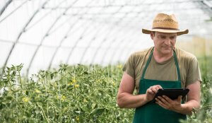 greenhouse owner with ipad
